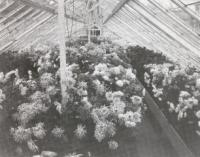 Hinman Glasshouse